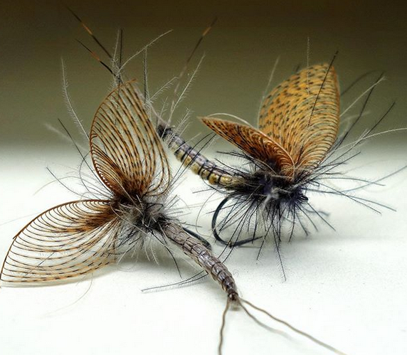 mouche truite mayfly